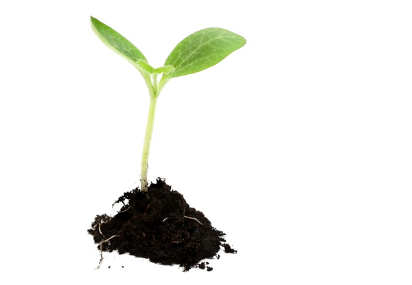 Growing-Plant-PNG-Image.png