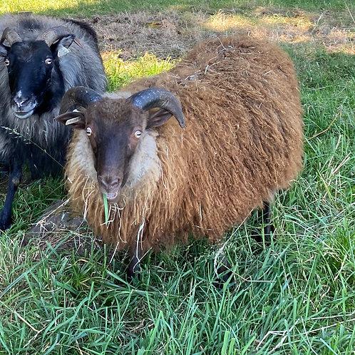 2020 Ram Lamb Forest