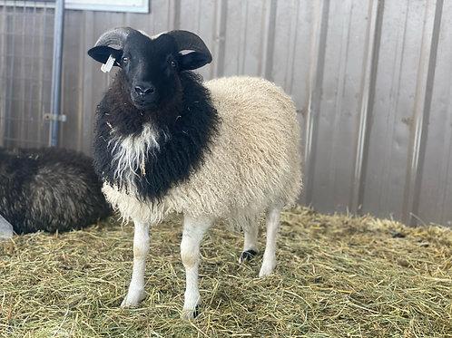 2021 Ram Lamb Simon