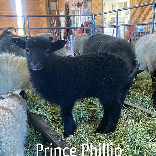2021 Ram Lamb Prince Philip