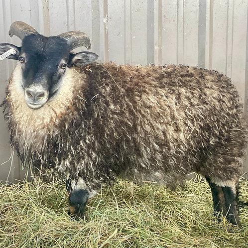 2021 Ram Lamb Elvis