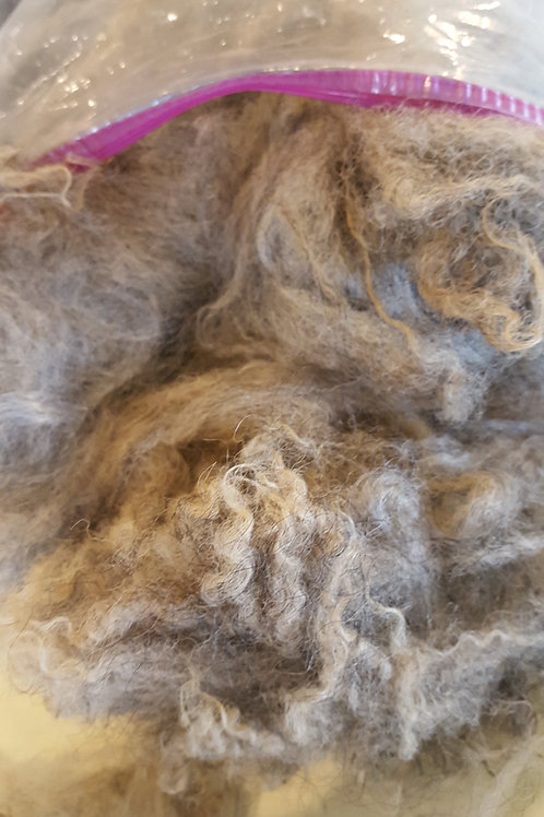 Raw Fleece 1# Icelandic Gray Honey