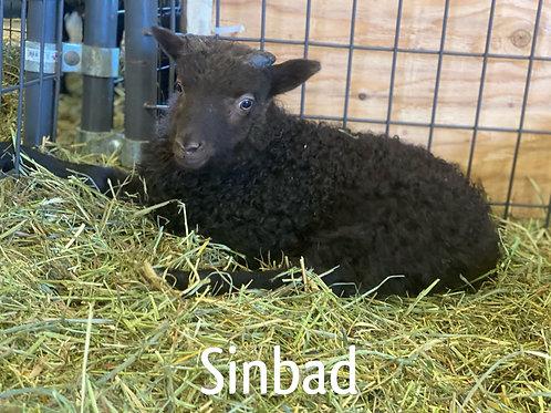 2021 Ram Lamb Sinbad