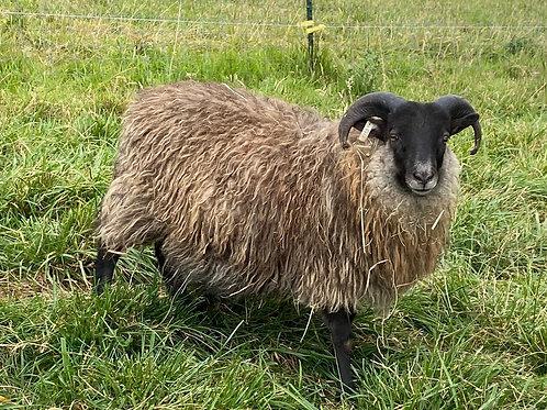 2020 Ram Lamb Juhr
