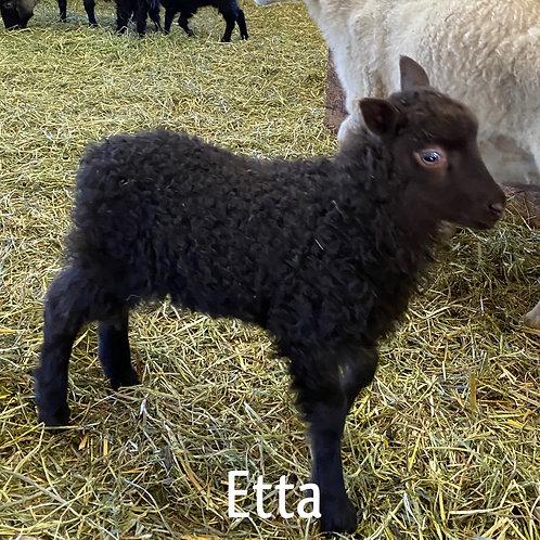 2021 Ewe Lamb Etta