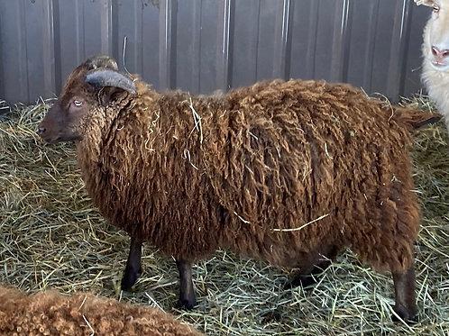 2020 Ram Lamb Sawyer