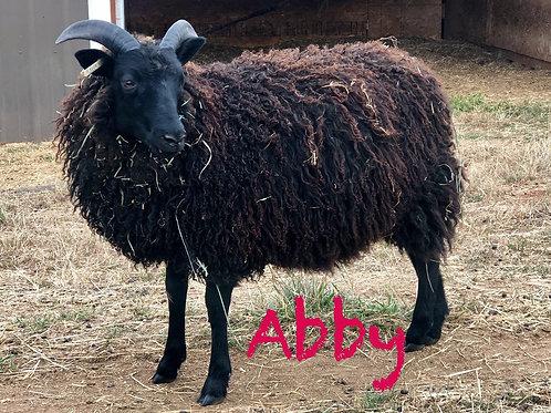 2019 Abby ewe lamb
