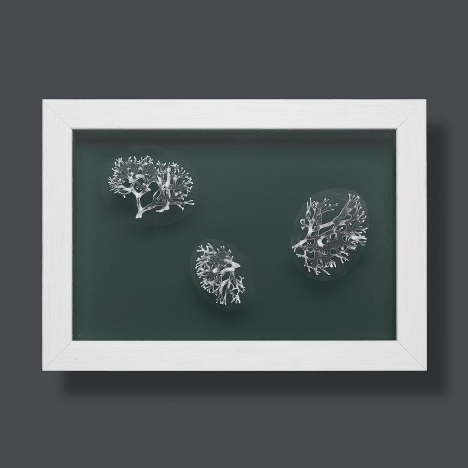 Lichen