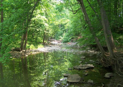 creek-in-the-woods.jpg