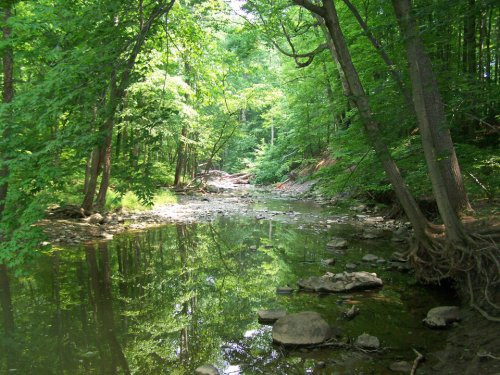 creek-in-the-woods.jpg