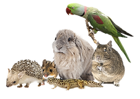 small animals.png