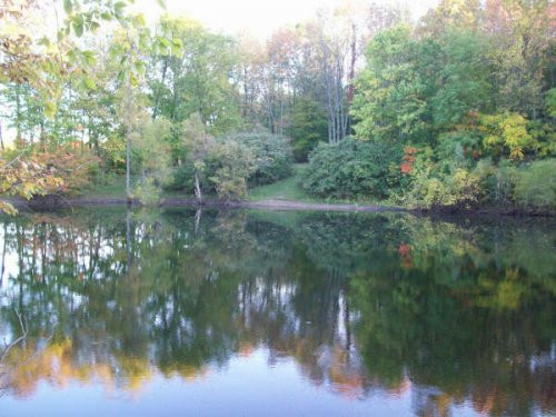 fishing-pond.jpg