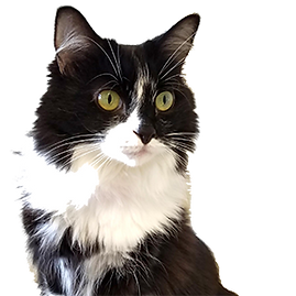 Cat pic small.png