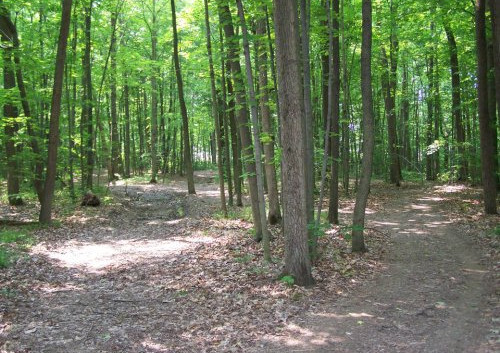30-acres-of-hiking-trails.jpg