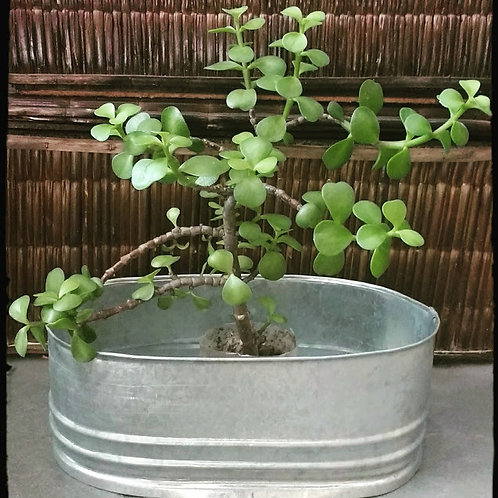 Maceta Jardinera Artesanal De Zinc Decoración Jardín