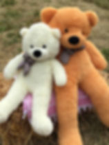 Wild FIeld Teddy bears.jpg