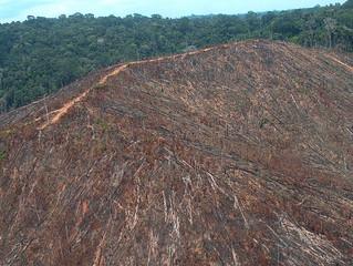Pan-Amazônia perdeu uma Rondônia entre 2000 e 2013