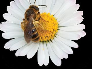 Sem abelha, sem alimento.