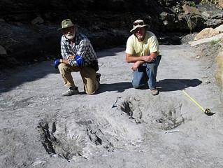 Pegadas preservadas revelam dança do acasalamento de dinossauros