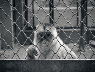 Ibama fecha zoológico do Rio e fixa multa de mil reais por dia