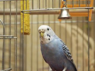 Veja os 5 erros mais comuns na alimentação de pássaros