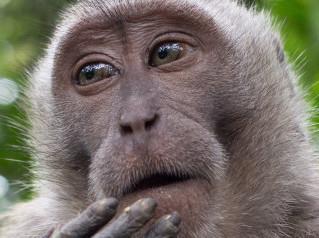 Sexta extinção em massa já começou, alertam cientistas