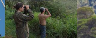 Que tal contribuir com o conhecimento e a conservação das aves de nosso país?