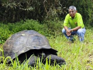 Nova espécie de tartaruga gigante é identificada em Galápagos
