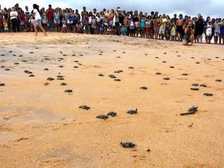 Soltura de tartarugas em Anchieta, ES, encanta moradores e turistas