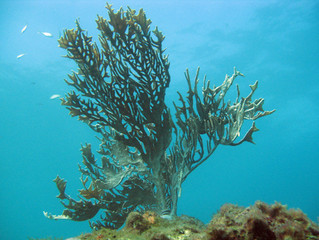 PAN Corais será executado até 2021