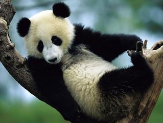 Animal em extinção não sensibiliza ninguém