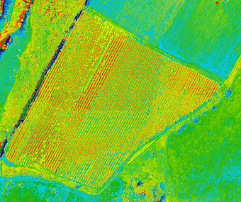 NDVI map of apple orchard
