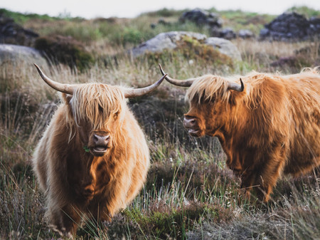 The Outlander Effect & Destination Storytelling