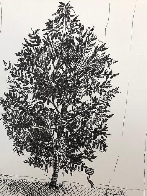Inktober 2020 - Japanese Camellia