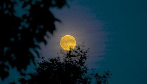 Moon in trees.jpeg