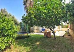 חצר עם עצי פרי