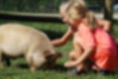 Farm Birthday Party.  Petting a Pig