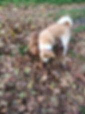 éducation chien canin balade sociable éducation chien Oise Val d'Oise