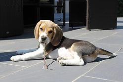 education educateur canin comportementaliste chien chiot oise val d'oise