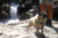 comportement chien balade oise val d'oise educateur canin