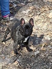 educateur canin education chien chiot oise val d'oise 60 95