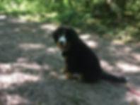 education chiot chien comportementaliste oise val d'oise canin educateur
