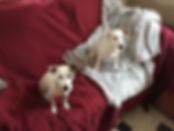 educateur canin education chien oise val d'oise