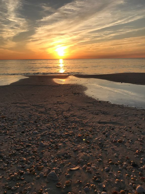 Shells at sunset