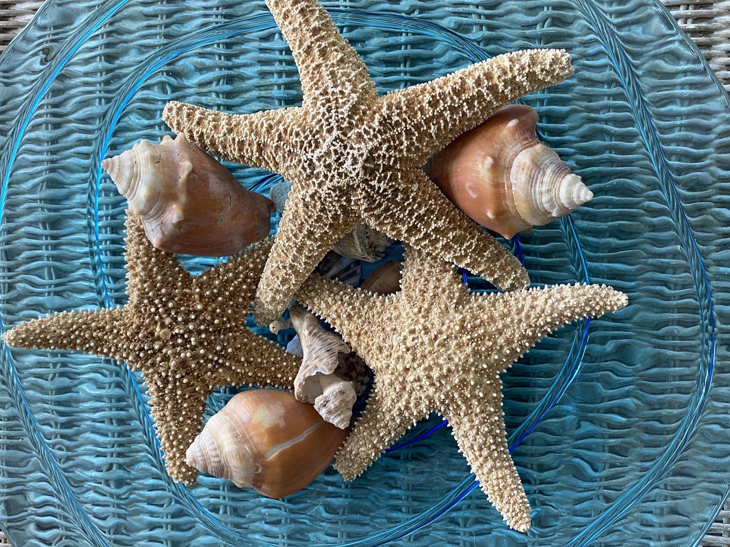 Shells and starfish