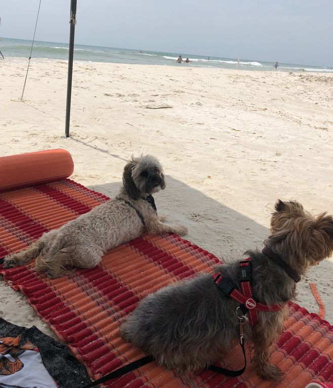 Leashed dogs are welcome on the beach