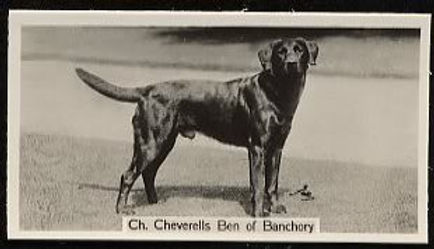 1938_Labrador_CH_CHEVERELLSBENOFBANCHORY