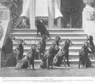 dogsbanchoryboloanddescendants-402x351.p