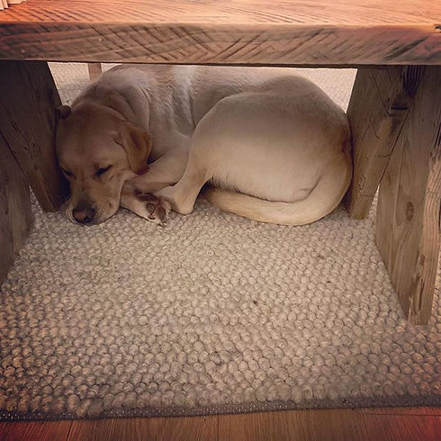 This is Sully dog_ camped out under the