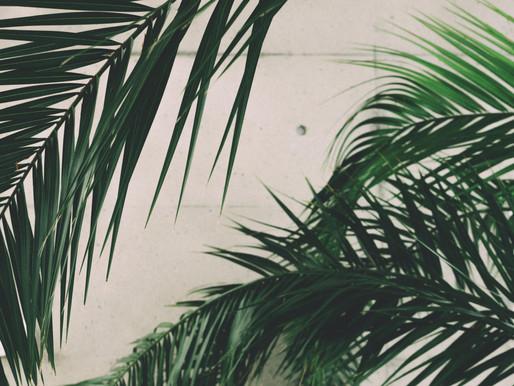 Palm / Passion Sunday